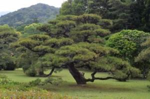 Trees 71
