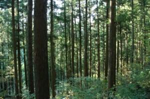 Trees 73