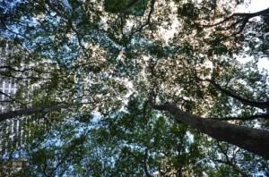 Trees 74