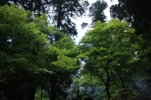 Trees 104