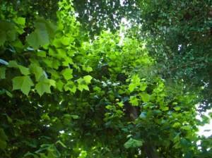 Trees 111