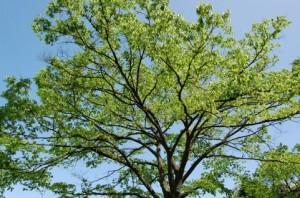 Trees 82