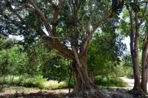 Trees 84