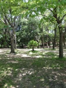 Trees 94