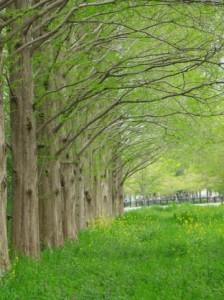 Trees 96