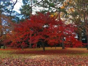 Autumn Leaves 125