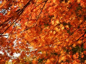 Autumn Leaves 131