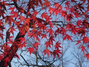 Autumn Leaves 133