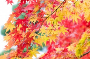 Autumn Leaves 142