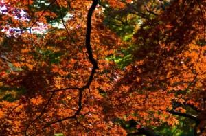 Autumn Leaves 144