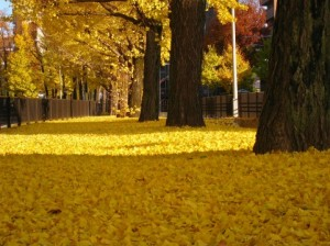 Autumn Leaves 147
