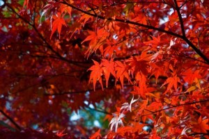 Autumn Leaves 148