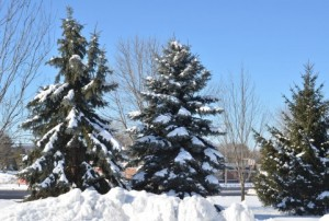 Snow 155