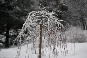 snow 157