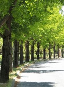 Trees 77