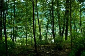 Trees 103