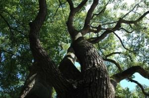 Trees 105