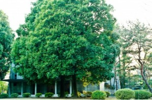 Trees 106