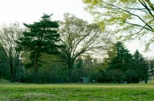 Trees 107