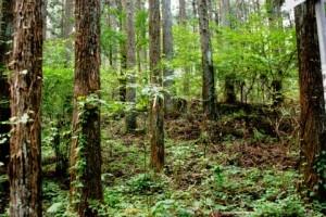 Trees 113