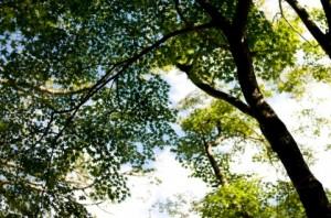 Trees 114
