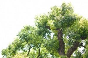 Trees 116
