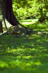 Trees 117