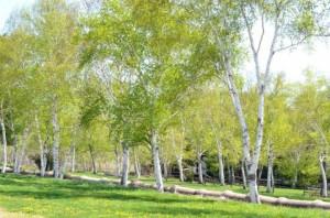 Trees 83