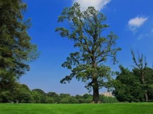 Trees 85
