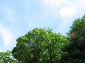 Trees 86