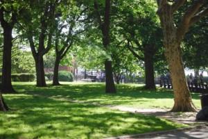 Trees 87