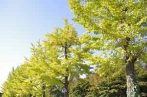 Trees 95
