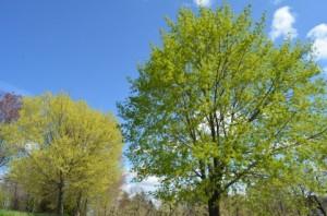 Trees 97