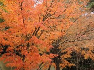 Autumn Leaves 122