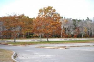 Autumn Leaves 123