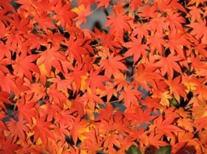Autumn Leaves 124