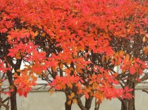 Autumn Leaves 126