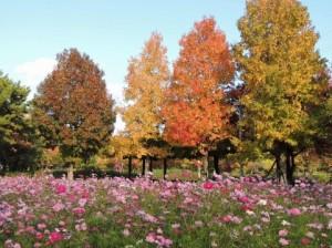 Autumn Leaves 127