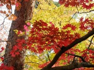 Autumn Leaves 128