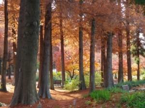 Autumn Leaves 130