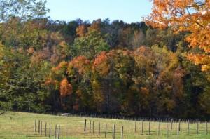 Autumn Leaves 132