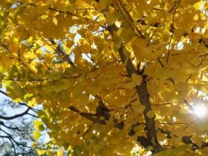 Autumn Leaves 135