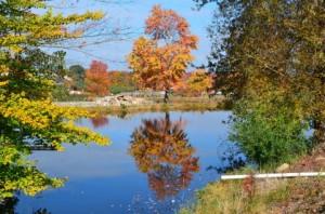 Autumn Leaves 136