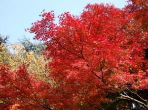 Autumn Leaves 138