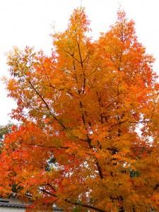 Autumn Leaves 139