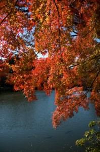 Autumn Leaves 140