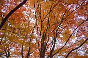 Autumn Leaves 141