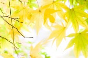 Autumn Leaves 143