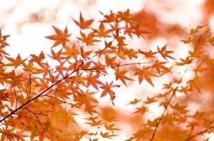 Autumn Leaves 145