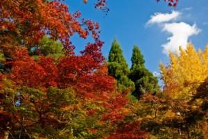Autumn Leaves 146
